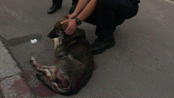 Собаку сбила машина, что делать и куда обращаться?