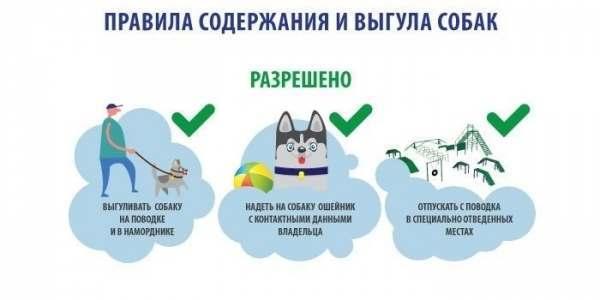 Закон о выгуле собак в России в 2020 году, штрафы
