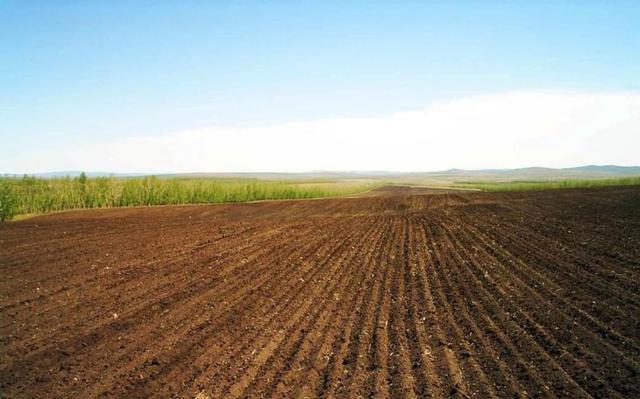 Какие есть нюансы при аренде земли сельхозназначения?
