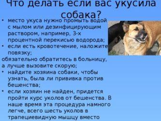 Покусала собака, как наказать хозяина и возместить ущерб?