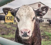 Как получить свободные земли КФХ сельхозназначения бесплатно?
