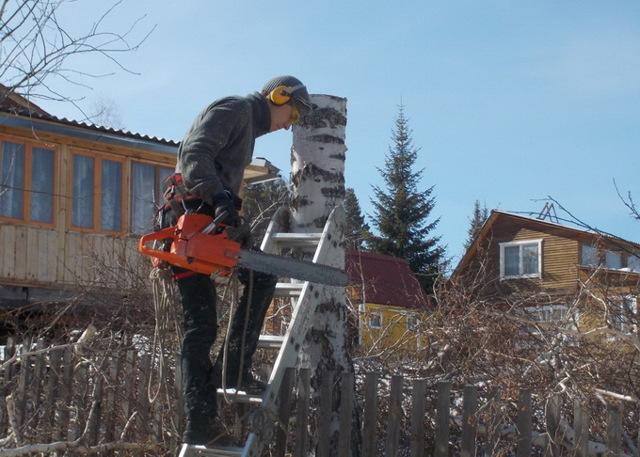 Как и кем регламентирована рубка деревьев на собственном участке?