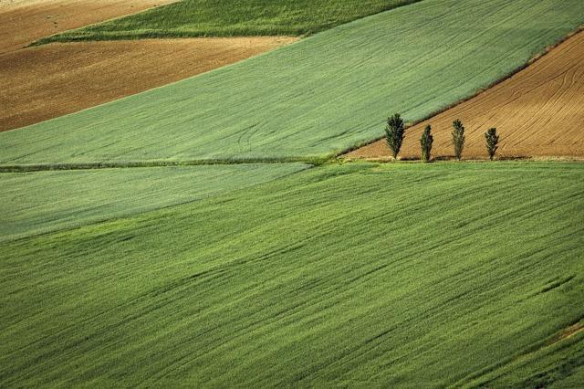 Договор аренды земель сельскохозяйственного назначения