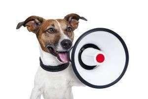 У соседей постоянно лает собака: что делать и куда жаловаться по закону РФ в 2020 году?