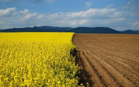 Что можно строить на землях сельхозназначения и что для этого нужно?