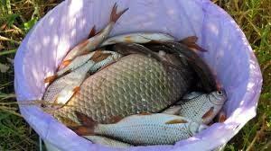 Закон о рыбалке и новое в правилах рыболовства 2020