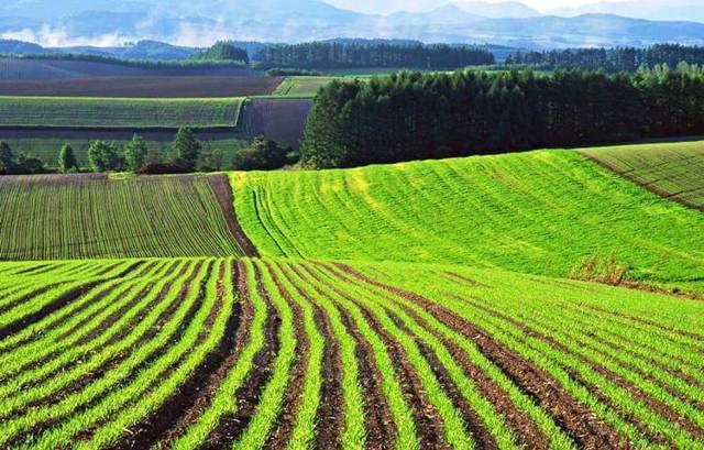 Виды разрешенного использования земель сельскохозяйственного назначения