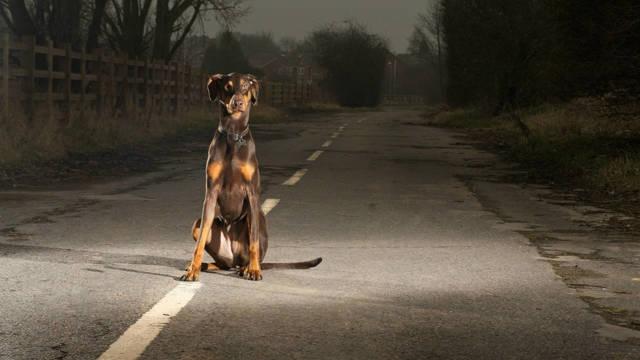Что делать, если сбил собаку на машине: возмещение ущерба