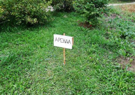 Аренда земельного участка у администрации и ее сроки
