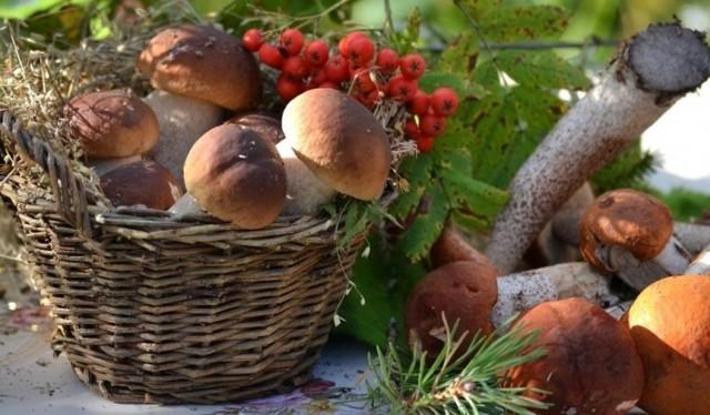 Налог на грибы и ягоды в России 2020 и его размер