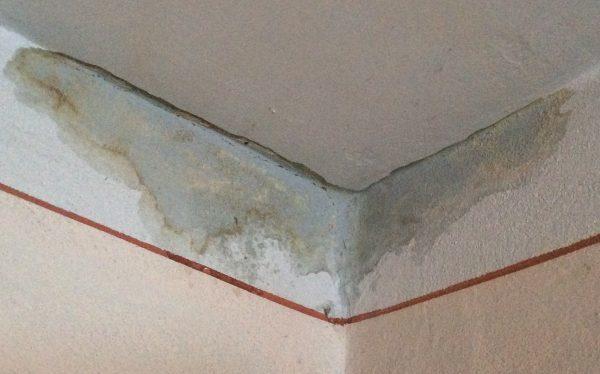 Сырая стена в квартире: что делать и куда обращаться?