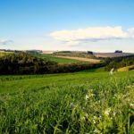 Как выкупить земельный участок из аренды в собственность в 2020 году: пошаговая инструкция